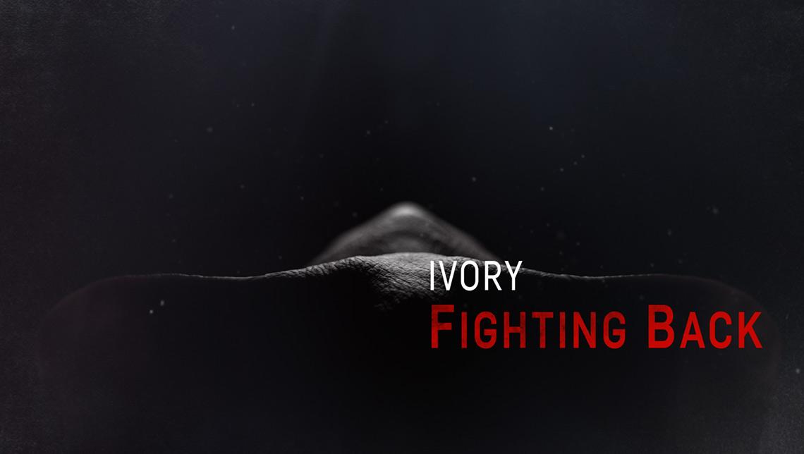 Ivory_04